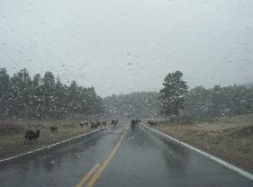 Una estampida de búfalos