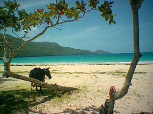 Playa El rinconcito de Samaná